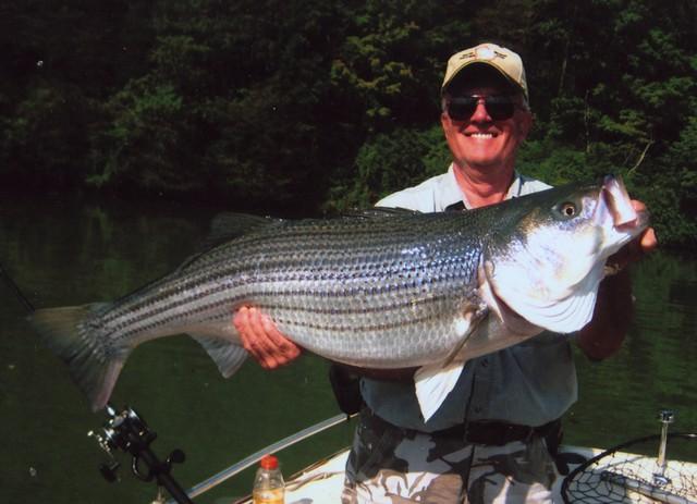 Fred Wammock 43 inch Striped Bass