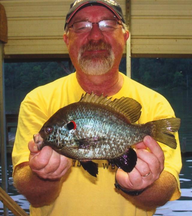 Joseph Willard 11.25 inch Redear Sunfish