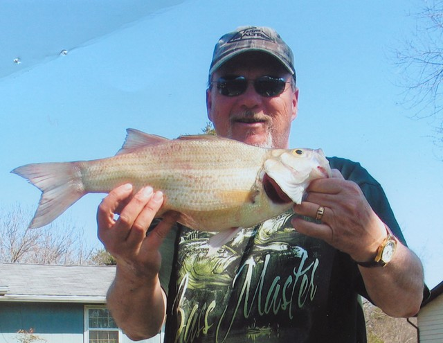 William Johnston 19.75 inch White Bass