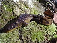 Amphibian Monitoring Program