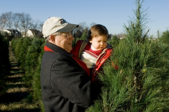 nashville christmas is just around the corner which means now is the time to start planning a trip to a local tree farm as the cool crisp air draws