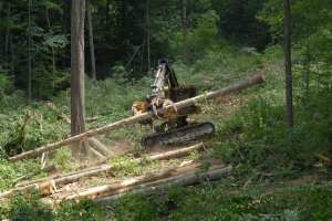 Natchez Trace timber harvest