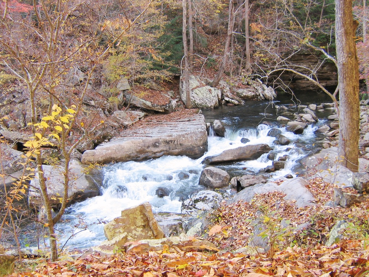 LaurelSnow_RichlandCreek_fallcolor