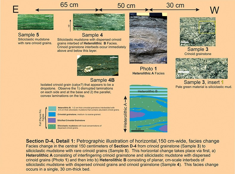 section-d4-detail1-facies-change-petrography