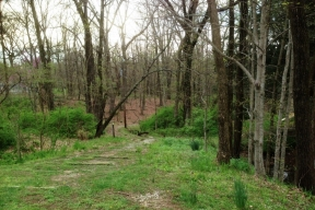 photo of trail leading into forest