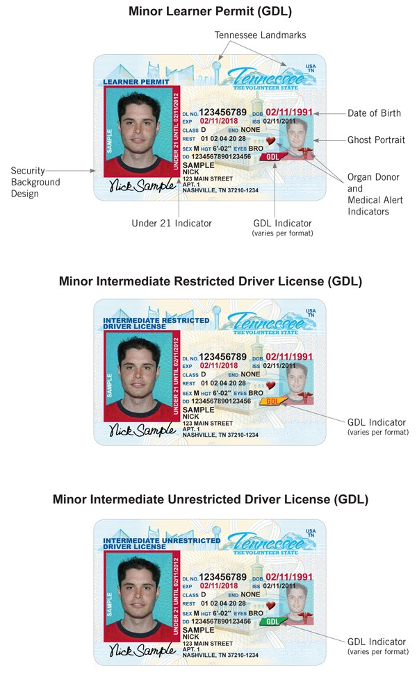 Examples Card License Driver Driver Card Card License License Examples Driver