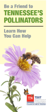Be a friend Pollinator image
