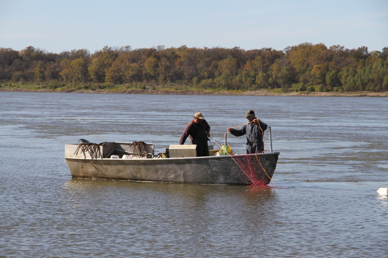 Commercial fishing for Fishing license tn