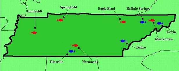 Trout Fishing In Tennessee Map.Trout Fishing In Tennessee Map Images Lobster And Fish