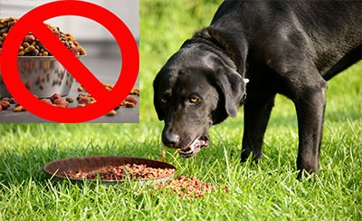 Do eating. Only feed pets a portion to be consumed during a meal.