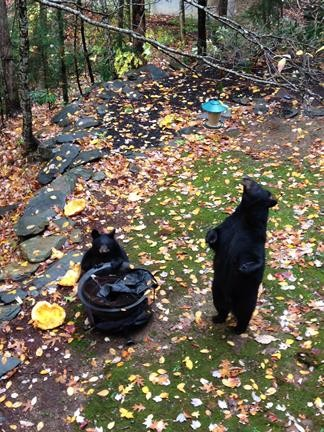 bears playing in yard, trying to get to trash can and bird feeders.