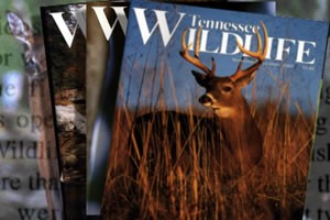 Tennessee Wildlife Magazine