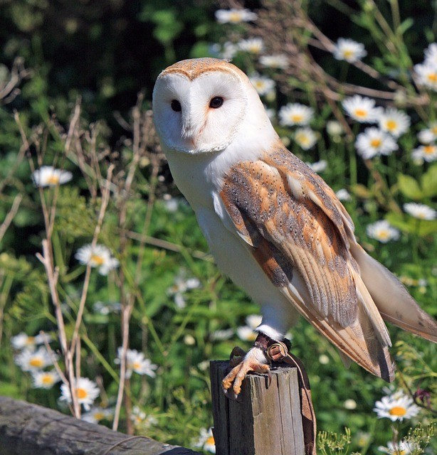 Barn Owl Nest Box | State of Tennessee, Wildlife Resources ...