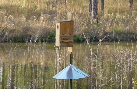 Wood-Duck-box-003